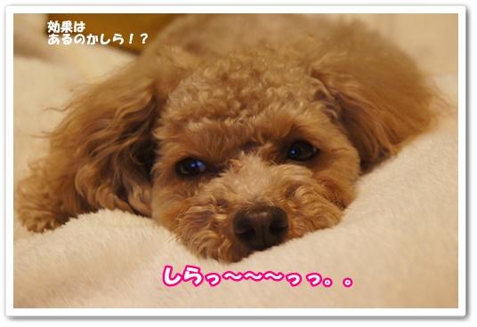 20120305yuzu10.jpg