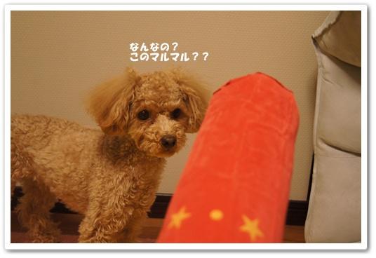 20120305yuzu5.jpg