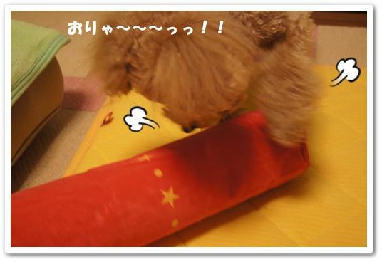 20120305yuzu6.jpg