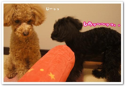 20120305yuzukosyo1.jpg