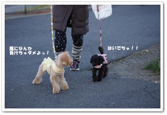 20120307yuzukosyo2.jpg