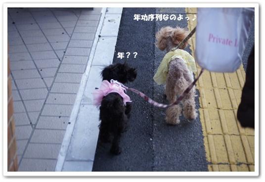 20120307yuzukosyo4k.jpg