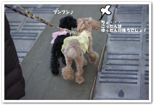20120307yuzukosyo5.jpg