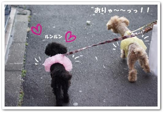 20120307yuzukosyo6.jpg