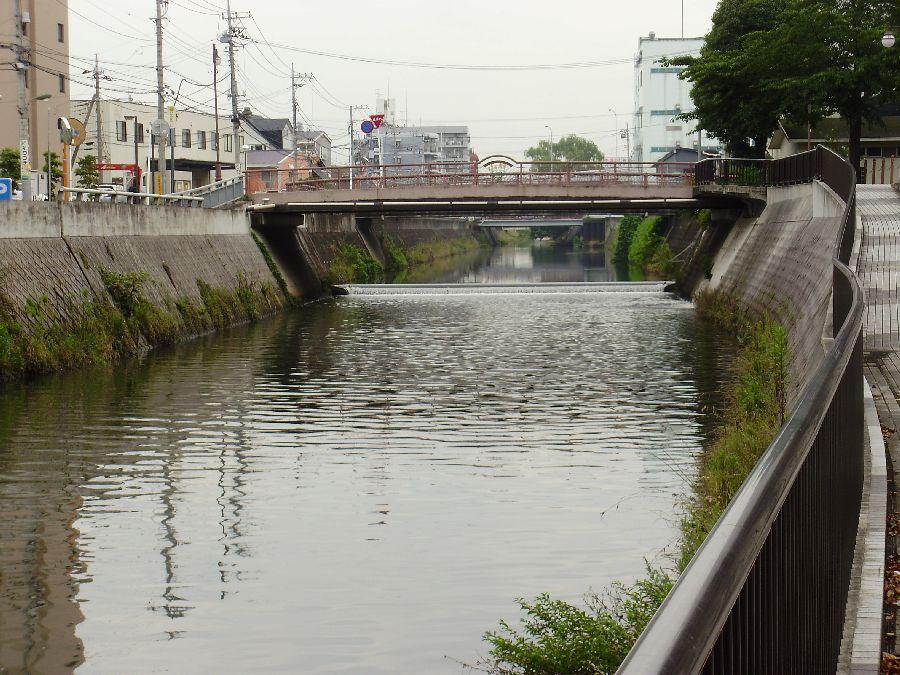 Fishing:新坂川: 釣場としての...