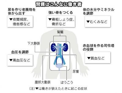 腎臓の役割