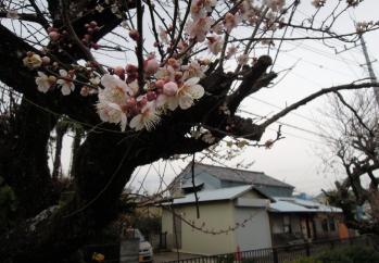 koubouume_0003.jpg