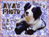 IMGP9460.jpg