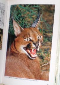 「野生ネコの百科」の1ページ