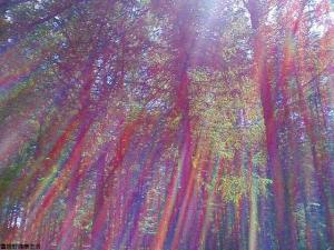 s-F中富森林公園からまつ林1002477