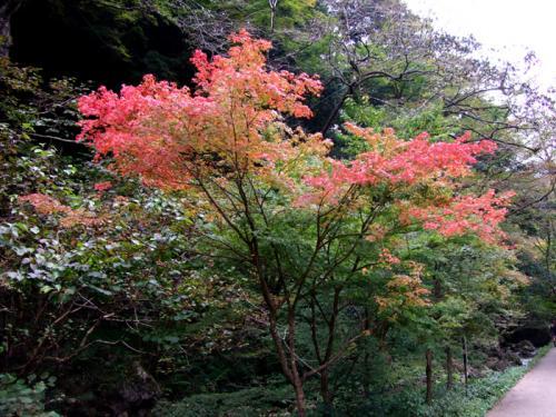 神庭の滝04
