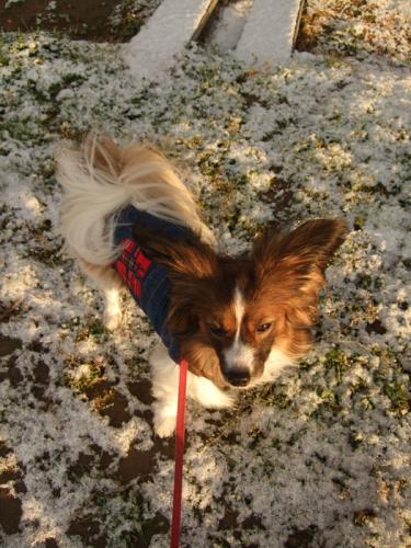 090125雪の散歩
