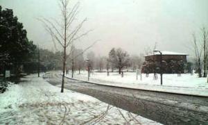 雪 長居公園