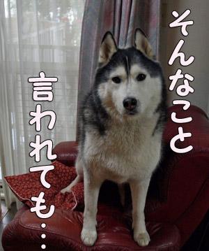 02-04-01-004.jpg