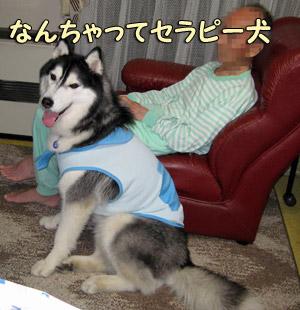 セラピー犬?