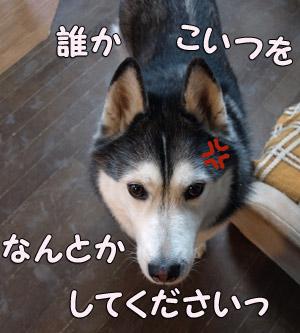 09-04-01-033.jpg