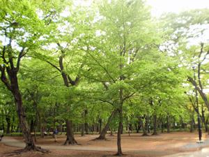 新緑の雑木林
