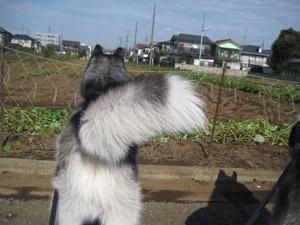 2008-11-07-015.jpg