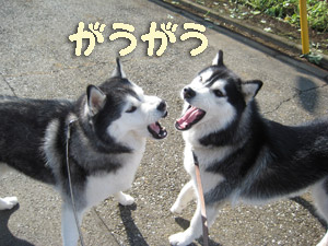 2008-11-07-030.jpg