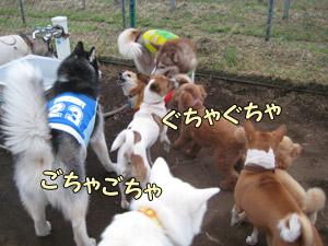 25-chiens.jpg