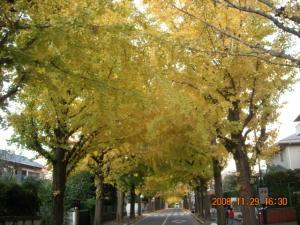 田園調布銀杏並木