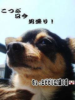 20060803194846.jpg