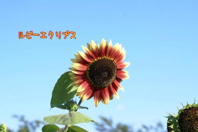 20070813110151.jpg