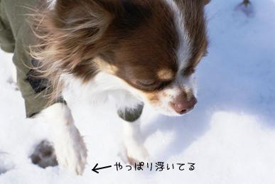 コピー ~ 画像 006