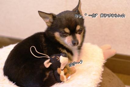 コピー ~ 画像 012