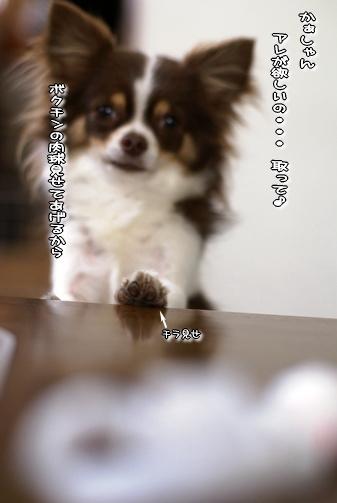 コピー ~ 画像 041