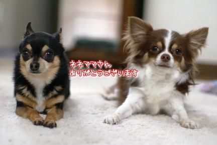 コピー ~ DSC07936