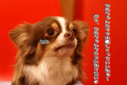 コピー ~ DSC07991
