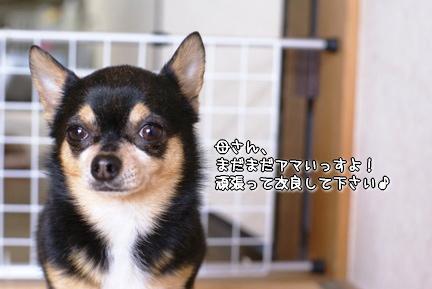 コピー ~ DSC08164