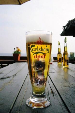 beer_convert_20080329002026.jpg