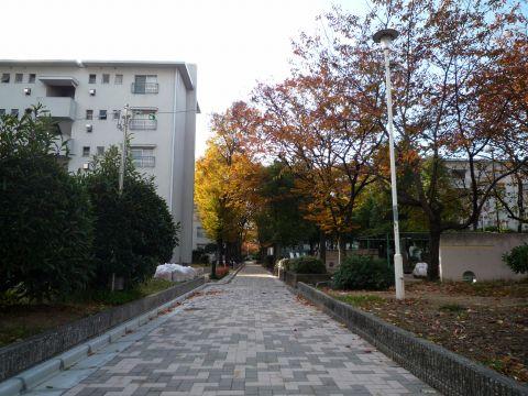 公団浅香山団地2
