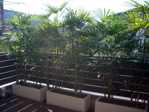 すべての講義 木の重さ : Spring Green 庭日記 2009年01月