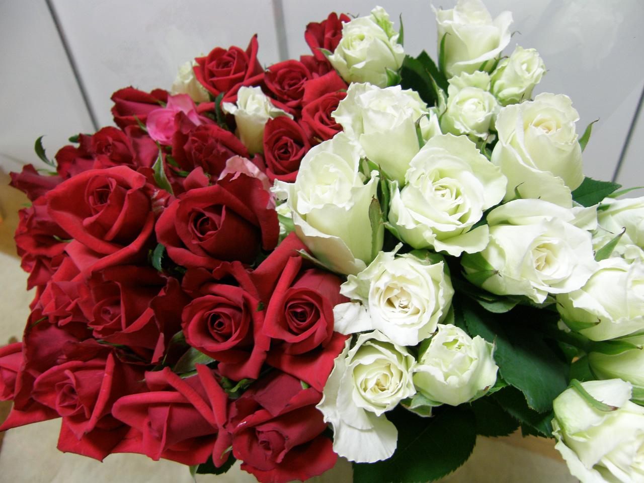 バラがいっぱいです・・・♪
