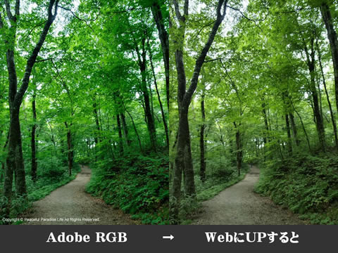 Adobe RGB 比較