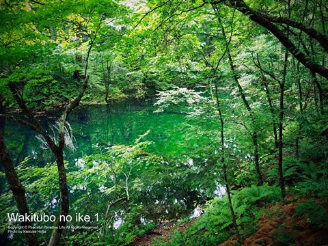 十二湖 沸壷の池