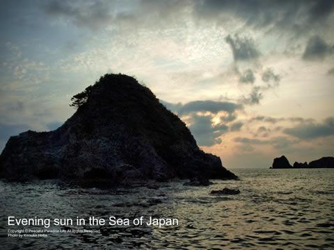 まさに日本的な岩がありました