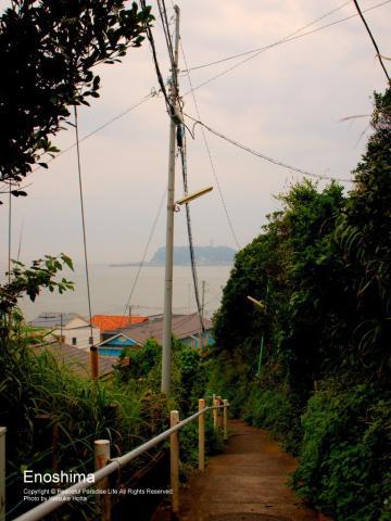 遠くに江の島