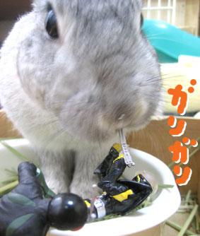 07-04-04-09.jpg