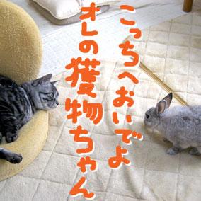07-04-09-03.jpg