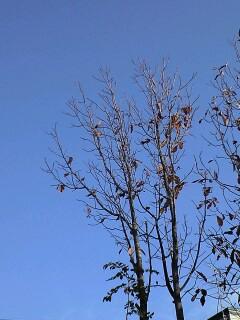 秋晴れの札幌♪