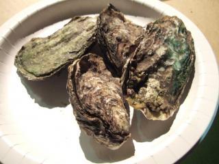 殻付牡蠣1