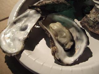 殻付牡蠣2