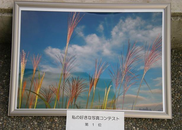 写友会写真人気コンテスト第1位「すすき」