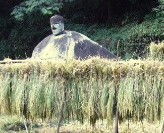 秋の季語より ハザに架かる稲
