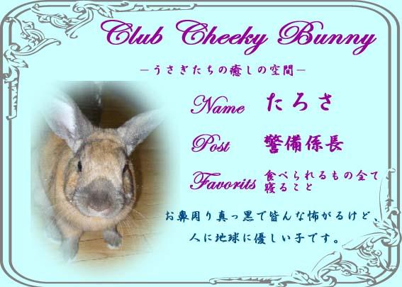 Club Cheeky Bunny名刺