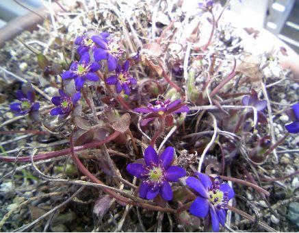 小さな花むらさき
